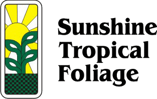 Sunshine Tropical Foliage – Home of the Dracanea 'Tarzan'
